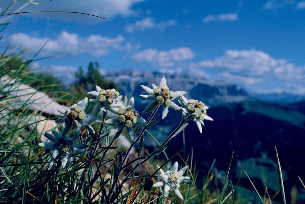Vacanze Alpine